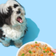 Pet Plate Coupon