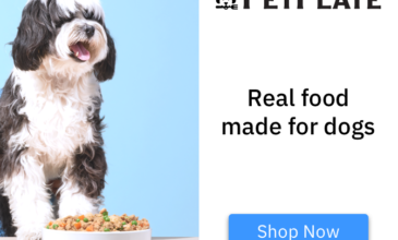 Pet Plate Coupon – Save 50% Off Your First Box!