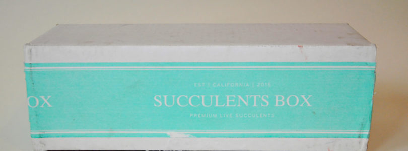 Succulents Box Review + Coupon – March 2019
