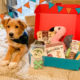 Pet Treater Coupon