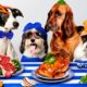 Pet Plate Coupon – Get 50% Off Your First Box!