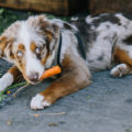 The Farmer's Dog Coupon – Save 50% Off Your First Box!