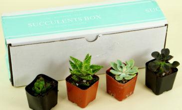 Succulents Box Review + Coupon – June 2019