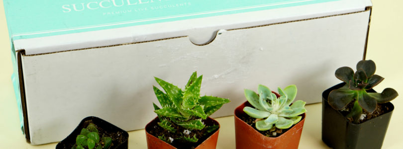 Succulents Box Review + Coupon – June 2019