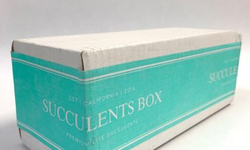 Succulents Box Review + Coupon – August 2019