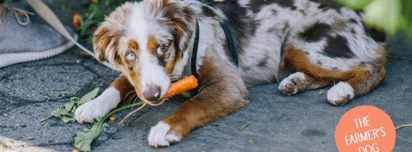 The Farmer's Dog Coupon