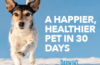 Darwin's Natural Pet Food Coupon – Save 75% Off Your First Box!