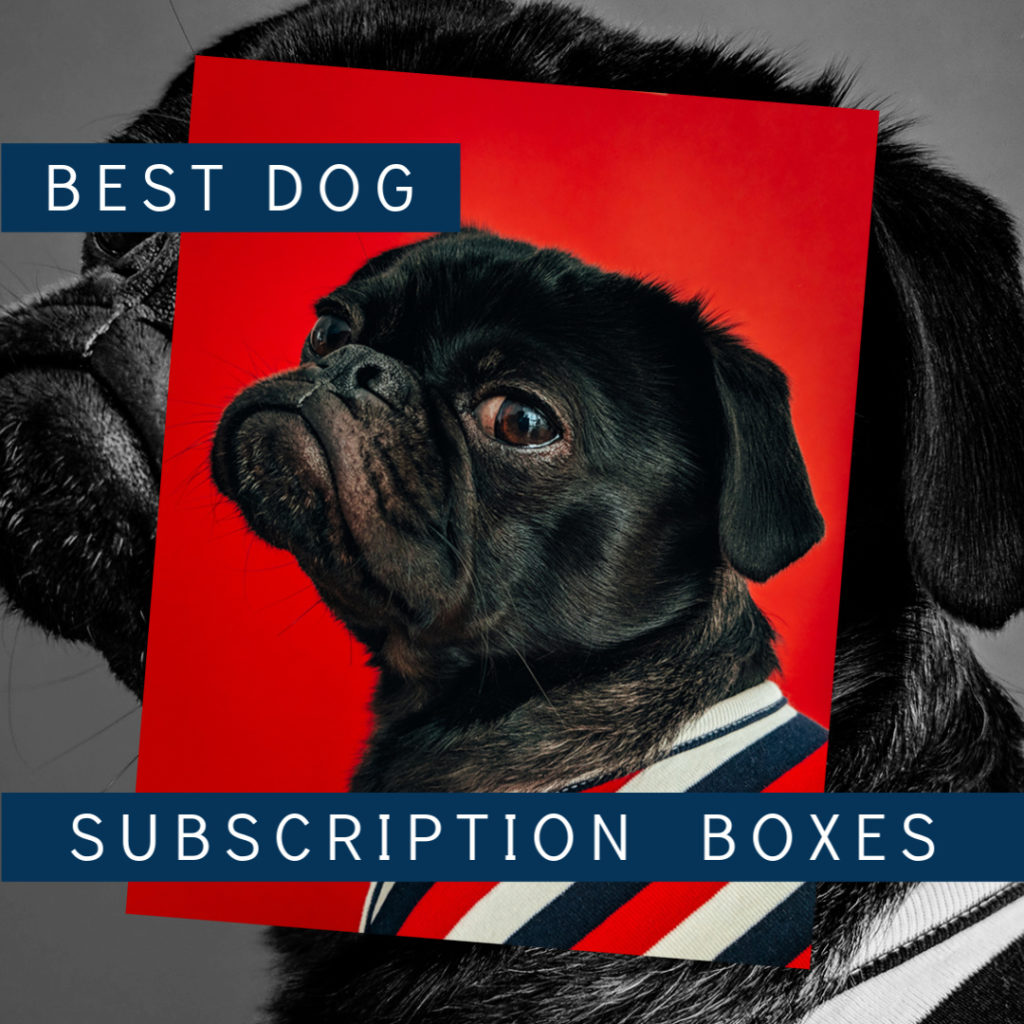 Best Dog Subscription Boxes 2020