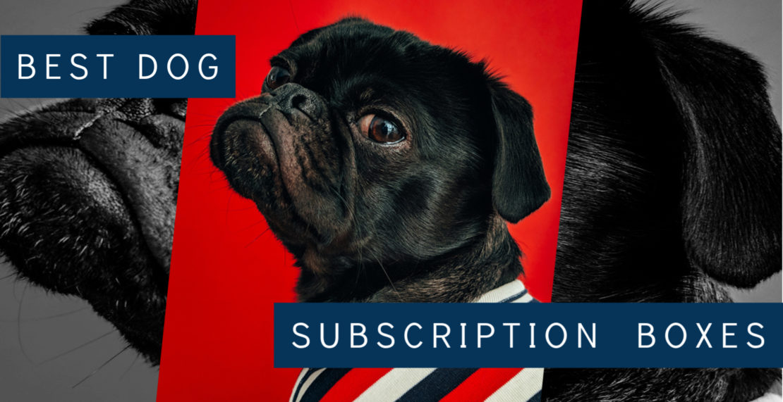 The Best Dog Subscription Boxes Of 2020